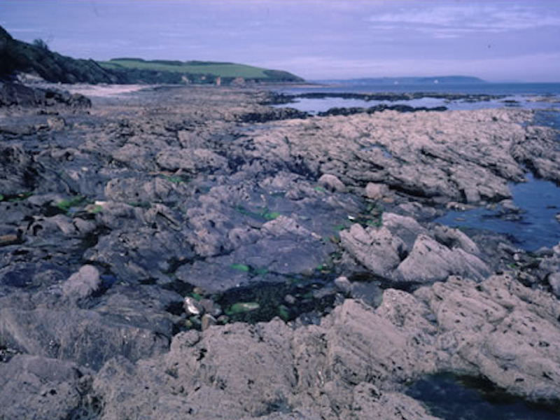 stephen hawkins ecology littoral